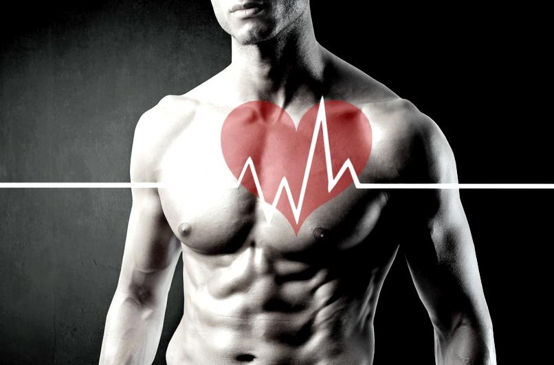 Сердечно-сосудистая система и выносливость