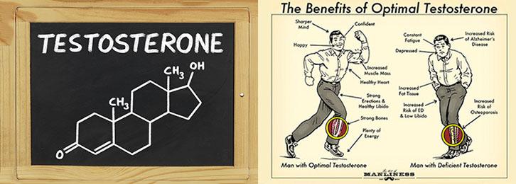Тестостерон - главный анаболический гормон